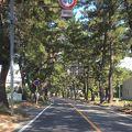写真:東海道松並木