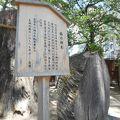 生田神社 楠の神木