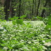 5月上中旬期間限定、隠れた花の見どころ