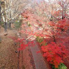 紅葉のお堀