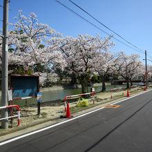 桜の名所、花見の時期は観光には不向き(笑)