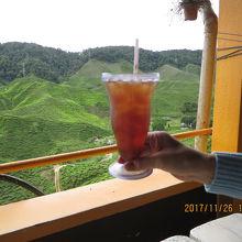 キャメロンバレーの紅茶畑を見ながら、紅茶で一服・・・
