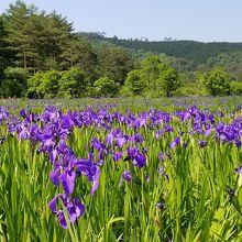 高原の風を感じながら八幡湿原を歩く
