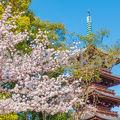 写真:旧寛永寺五重塔