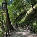 香嵐渓 もみじのトンネル