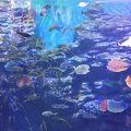 写真:SEA LIFE釜山アクアリウム