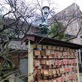 写真:梅の花 (綱敷天神社 御本社)