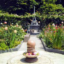 お寺には珍しい「バラ園」