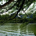 写真:千鳥ヶ淵緑道ボート場