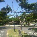 写真:カピオラニ公園