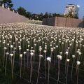 写真:東大門デザインプラザ LEDバラ庭園