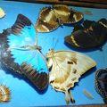 写真:オーストラリアン バタフライサンクチュアリ