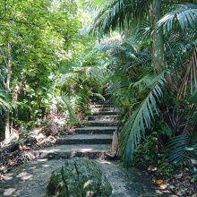 ヤシ群落の中です。熱帯ジャングルのような歩道です。