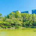 写真:日比谷公園 雲形池