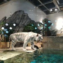 魅せる動物園