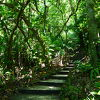 手軽にジャングル感を味わえる場所