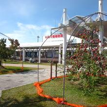 実る林檎と綺麗なターミナルビル 〜 いわて花巻空港