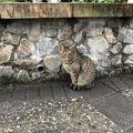 写真:猴トン猫村
