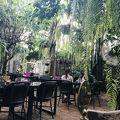 写真:ファーン フォレスト カフェ