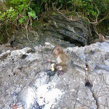 お猿さんの島!そして珍しい粘土?の浜