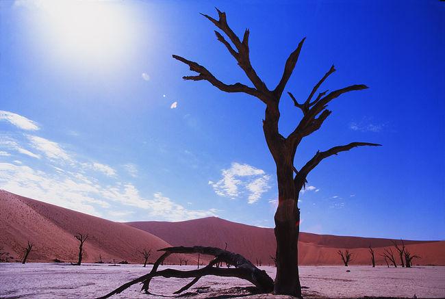 ナミブ砂漠の画像 p1_37