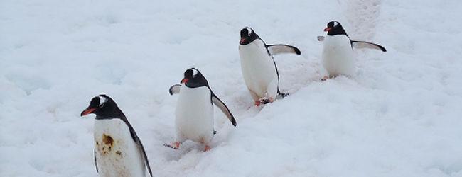 地球最後の秘境 南極�(ペンギン編)