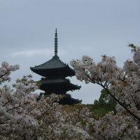 京都・奈良一人旅 〜桜編〜 / 京都・奈良