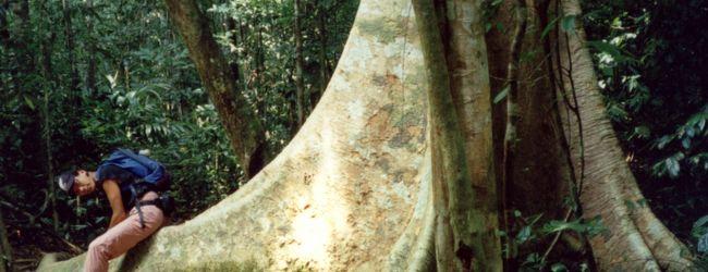 TAMAN NEGARA  (タマン・ネガラ国立公園...