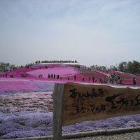 愛知県の一番高所の花畑♪茶臼山高原芝桜♪