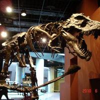 ミュージアムパーク自然博物館見学&周辺バードウォッチング [2010](1)