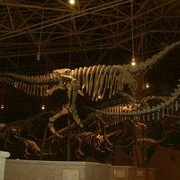 2008 08 九郷 自貢恐竜博物館
