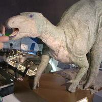 福井県立恐竜博物館で恐竜に初対面
