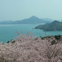 桜のしまなみ海道(伯方島:開山公園〜大三島〜岩城島:積善山)