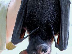 Hugs and kisses in Darwin;Wildlife Park&CBD;ダーウイン編