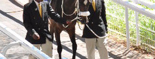 南ア便り〜Gautrain乗車と美しい馬たち鑑賞