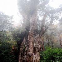 2度目の屋久島で、縄文杉トレッキングにチャレンジ!