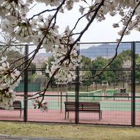 テニスコートも桜ぁ〜♪ ちょこっと野崎まいり