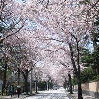 <日帰り一人旅・前編> パワー充電 箱根のち城下町・小田原散策(桜風景)