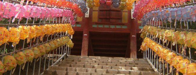 韓国花見ハイキング� 伝灯寺