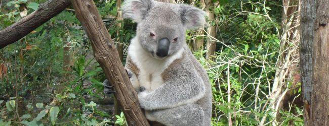 ★2012年GW:オーストラリア5日間の旅★