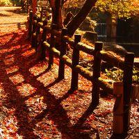 紅葉へ行こうよォ 瀬戸・岩屋堂公園 〜2012.11.18〜