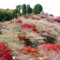 たなびく雲のよう 川見(せんみ)の里の四季桜と紅葉♪ 2012