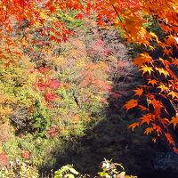 絶景の紅葉を愛でる〜奥多摩むかしみち〜