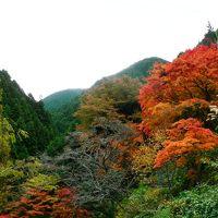 日本の旅 関西を歩く 大阪府南河内郡千早赤阪村金剛山(こんごうさん)ロープウェイ周辺の紅葉