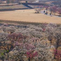 ★偕楽園の梅☆ 見頃を迎えたのでおでかけ〜!今年は、梅以外も楽しんじゃった〜!