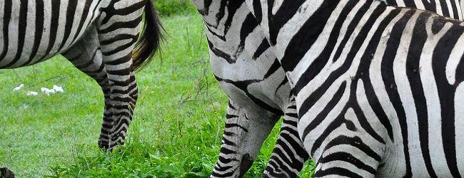 ンゴロンゴロの表情豊かな動物達