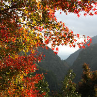 紅葉の大歩危峡、祖谷渓から栗林公園秋のライトアップへ