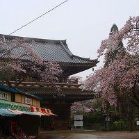 アメリカ15日間の旅前泊の花見(11)・・・宗吾霊堂境内の観桜