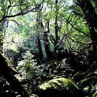 激歩140キロ  4つの世界遺産を歩き回った今年の夏の旅  屋久島もののけ姫の森編