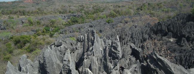 マダガスカル大自然紀行 動物たちとツィン...